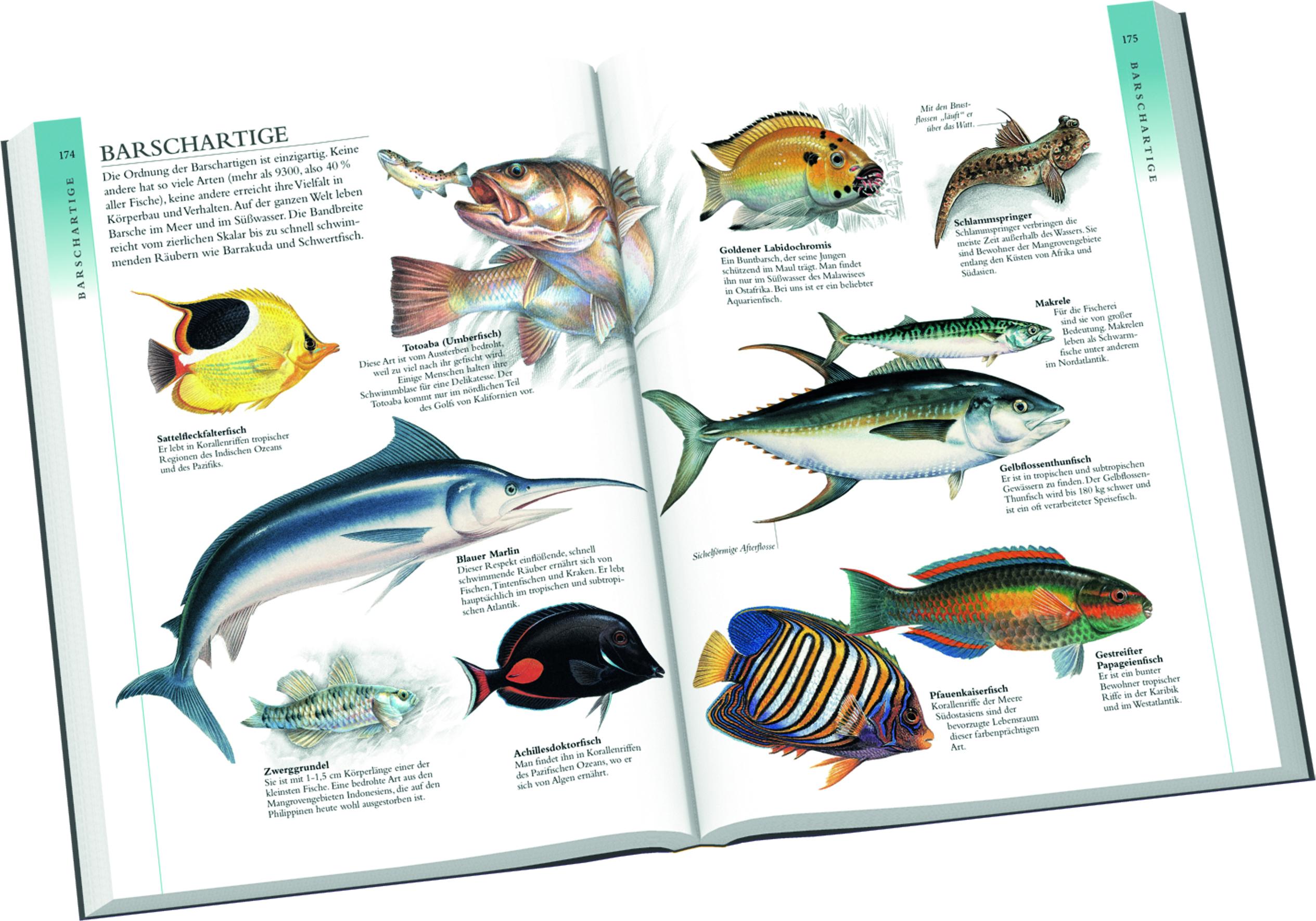 Grundschulkinder, Tierklassen, Sachbuch, lernen