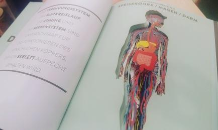 Sachbuch, Wissensbuch, Kinderbuch, lernen, Körper, Biologie